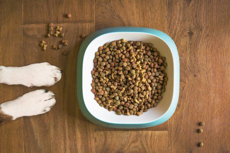 Wat moet je doen als je hond niet meer wil eten